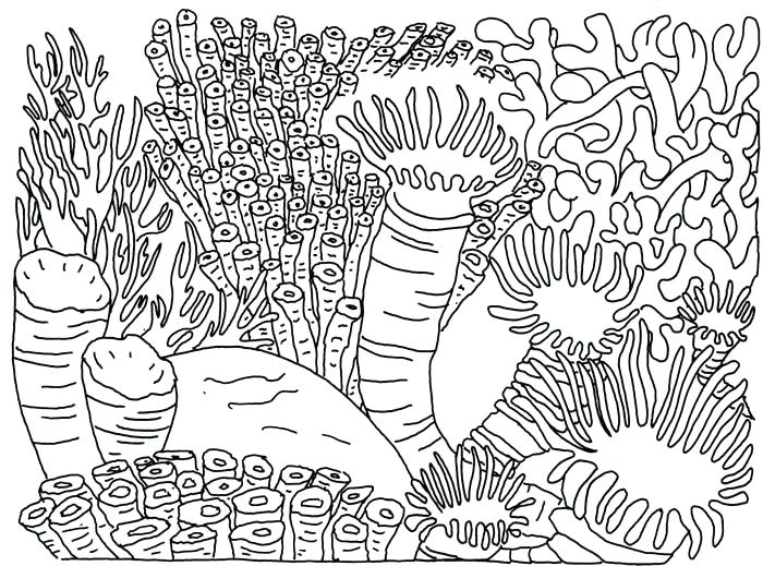 700x519 Coral Reef Coloring Page Coral Reef Food Chain Yahoo Search