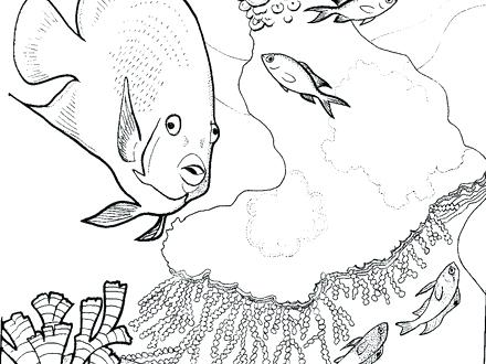 440x330 Coral Reef Coloring Pages Coral Reef Coloring Pages Coral Reef