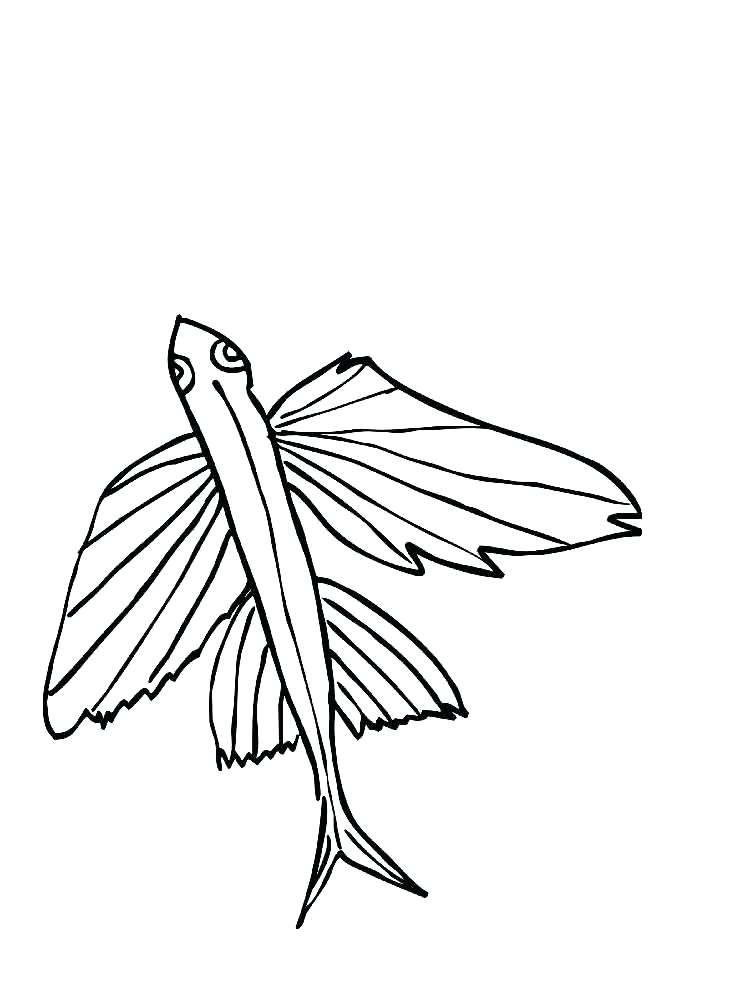 750x1000 Eel Coloring Page Flying Fish Coloring Pages Moray Eel Coloring