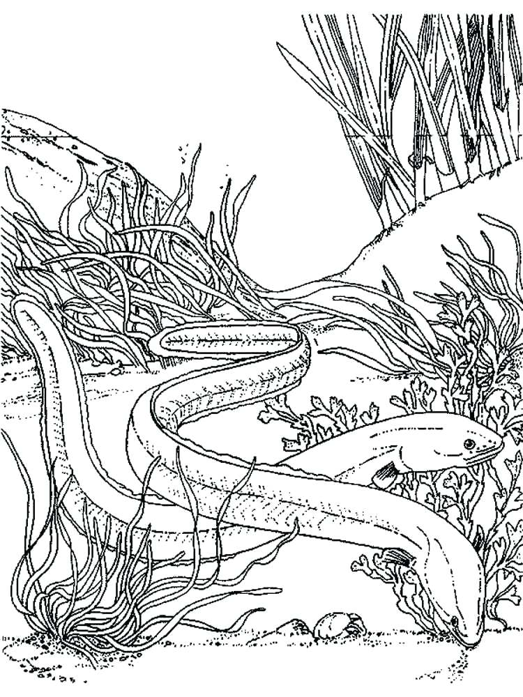 750x1000 Eel Coloring Pages Eels Coloring Pages Printable Moray Eel