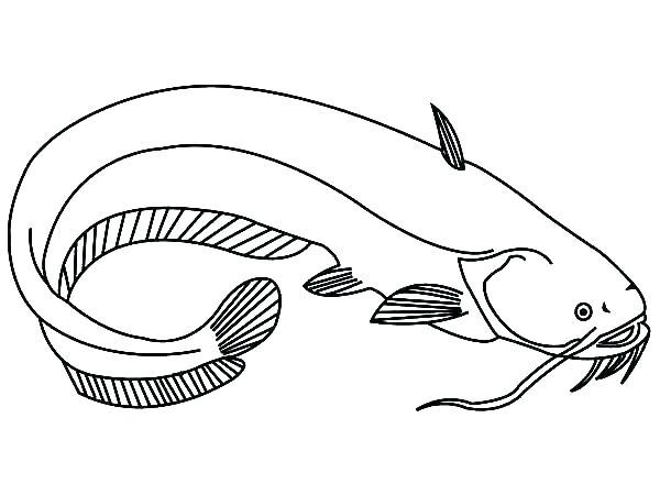 600x450 Eel Coloring Page Eel Coloring Page Eel Coloring Page Catfish