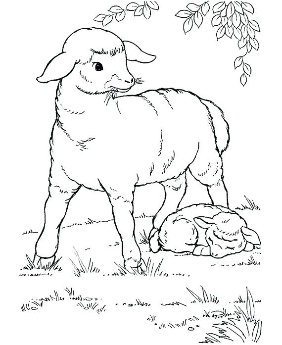 570x697 Eid Coloring Pages Coloring Pages Eid Al Fitr Coloring Pages