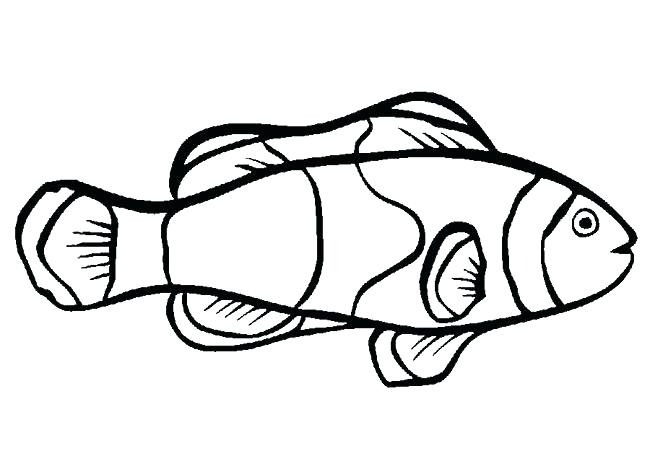 650x469 Eel Plus Eel Coloring Page For Kids Parramatta Eels Coloring Pages