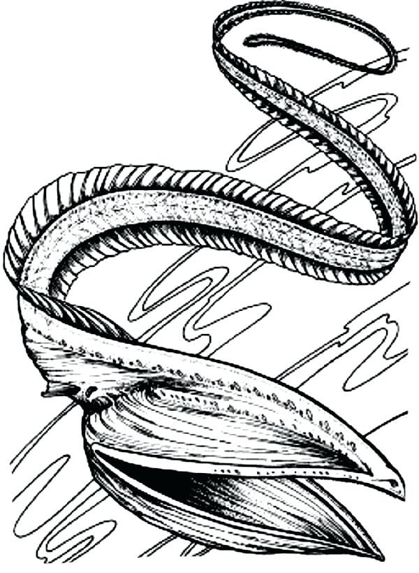 600x820 Eel Coloring Page