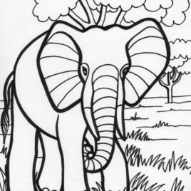268x268 Elephant Color Page Give The Best Coloring Pages