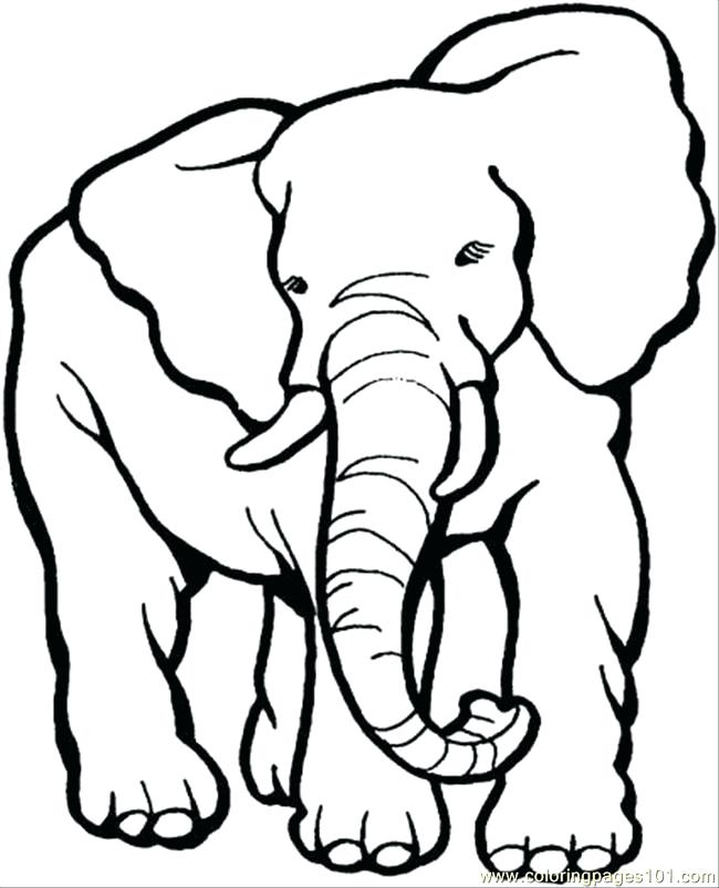 650x802 Coloring Pages Of Elephants Or Coloring Pages Elephant Awesome