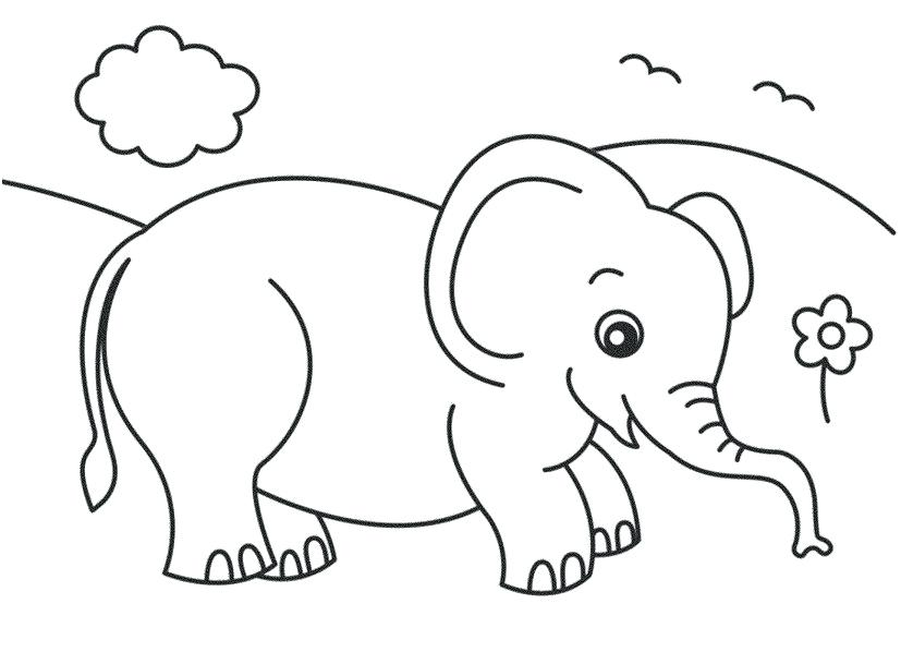 827x609 Free Printable Elephant Coloring Pages Kids Coloring Pages