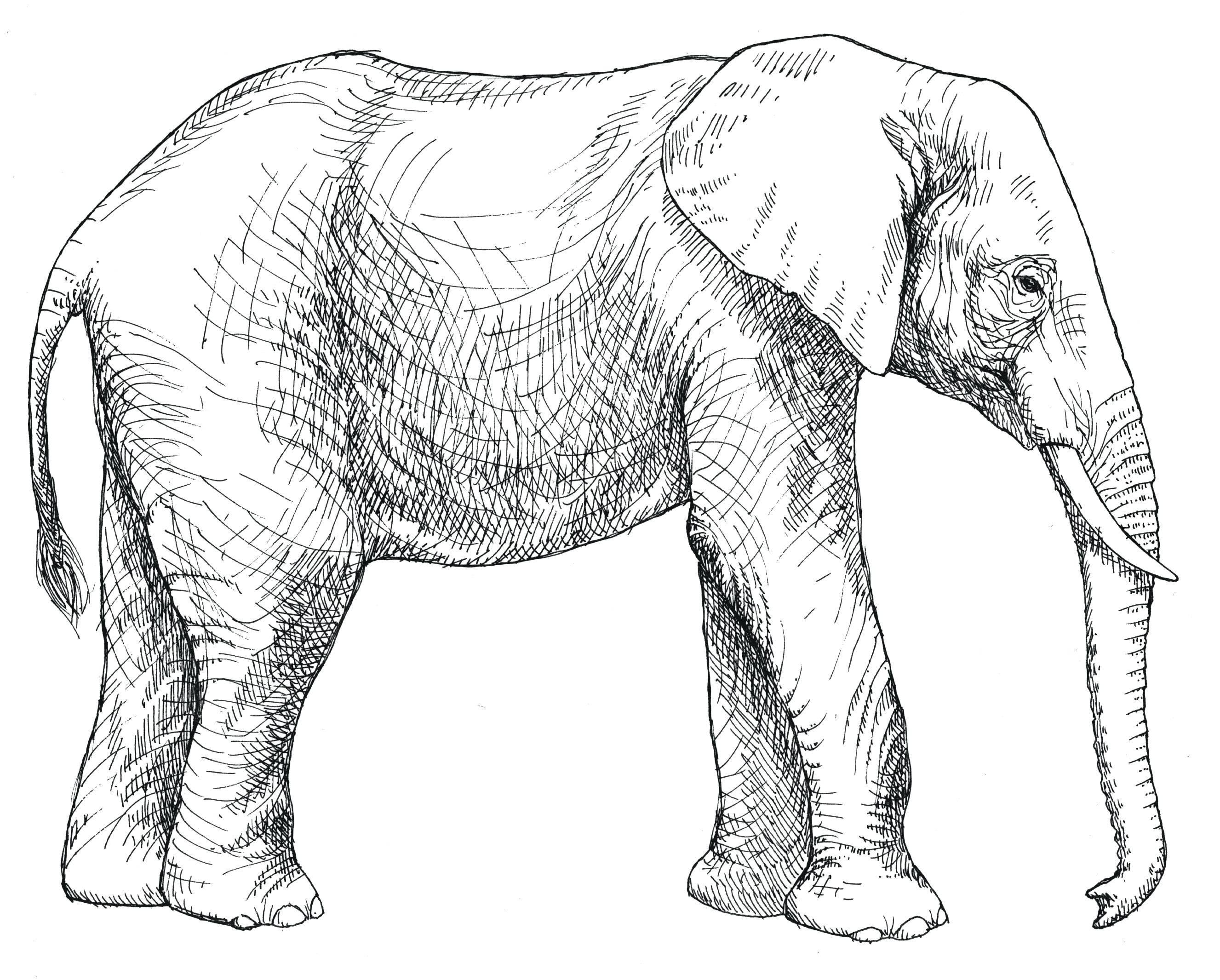 2653x2131 Coloring Page Baby Elephant Coloring Pages Happy Holds Its