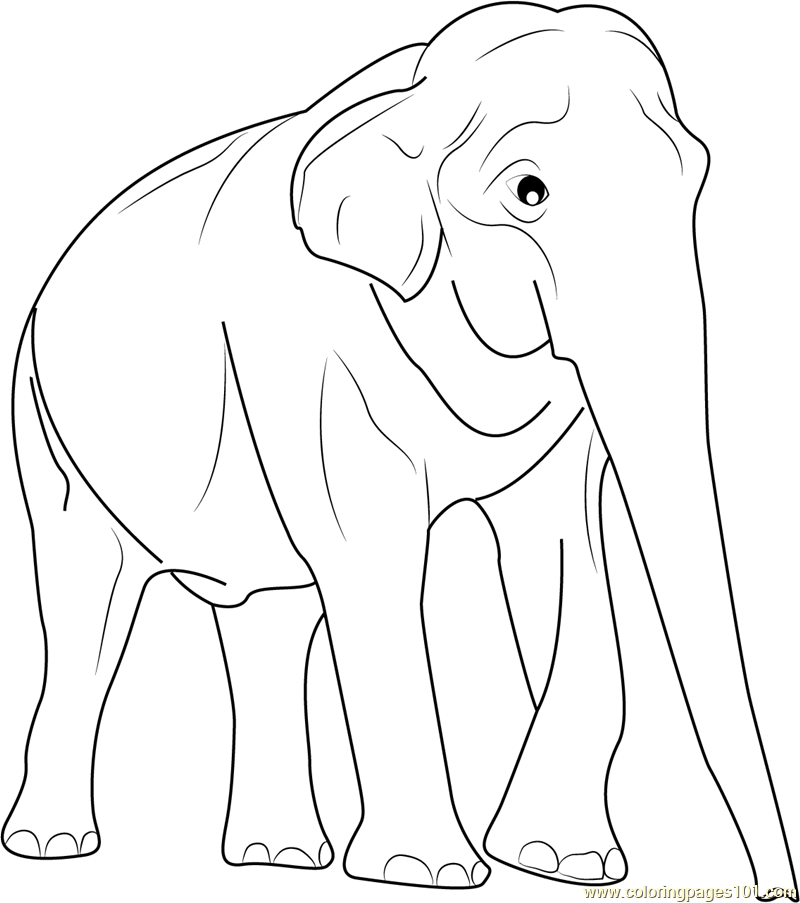 800x903 Elephant Coloring Pages