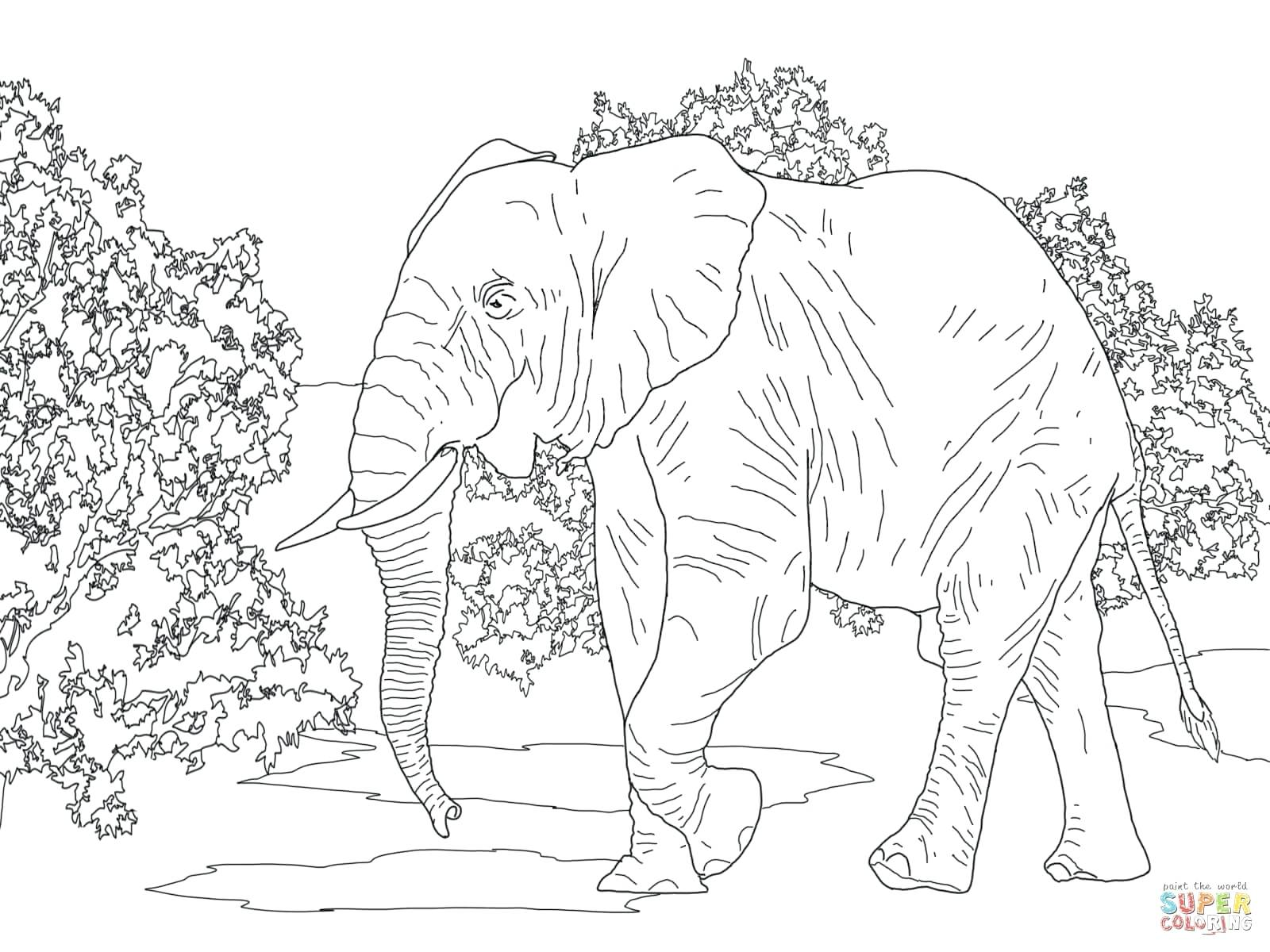 1600x1200 Coloring Pages Elephant Coloring Page Modest Picture To Color