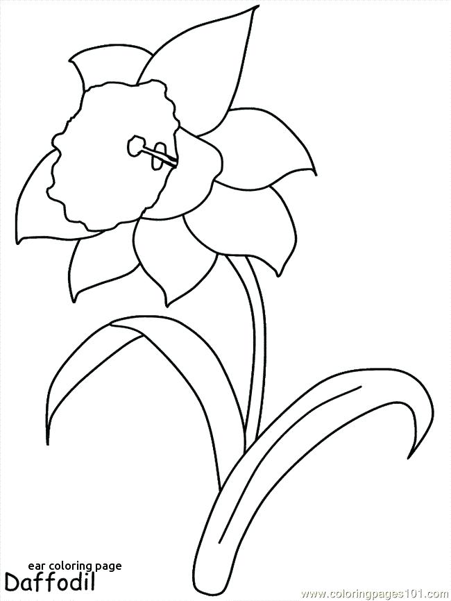 650x866 Ear Coloring Page Best Coloring Pages Images On For Ear Coloring