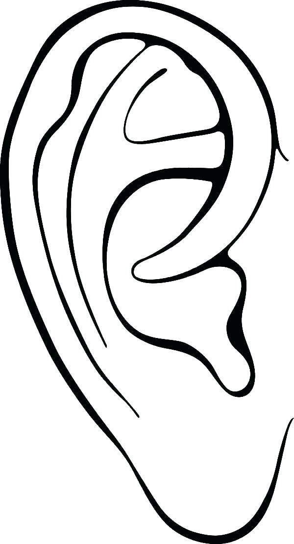 600x1109 Ear Coloring Page Corn Coloring Page Coloring Page Of Corn Ear