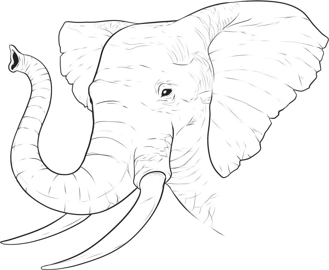 1109x911 African Elephant Coloring Page
