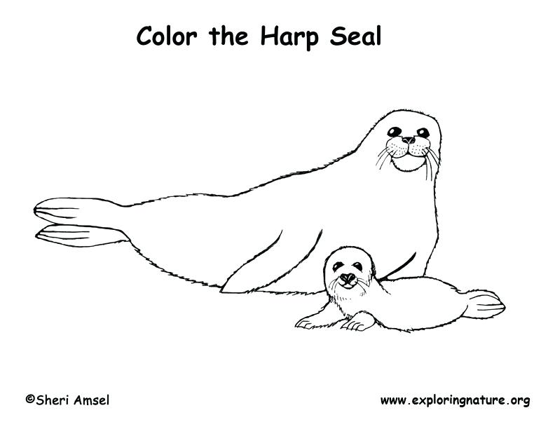 792x612 Seal Coloring Page Elephant Seal Coloring Page