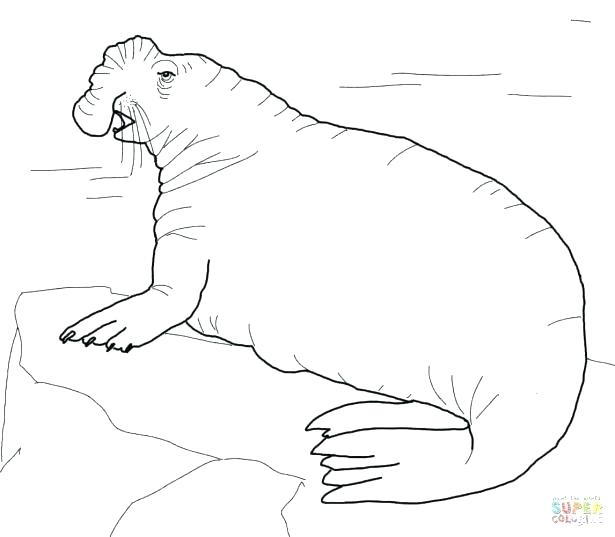 615x537 Seal Coloring Page State Seal Coloring Page Pages Animals Harbor
