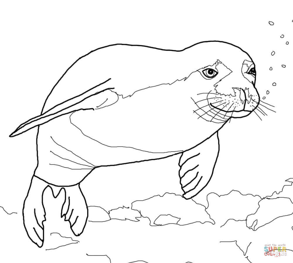 1000x896 Seal Coloring Pages Printable Coloring Pages
