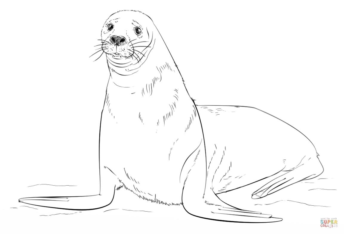 1152x784 Seal Coloring
