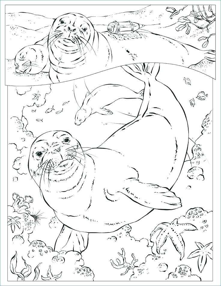 736x952 Seal Coloring Pages