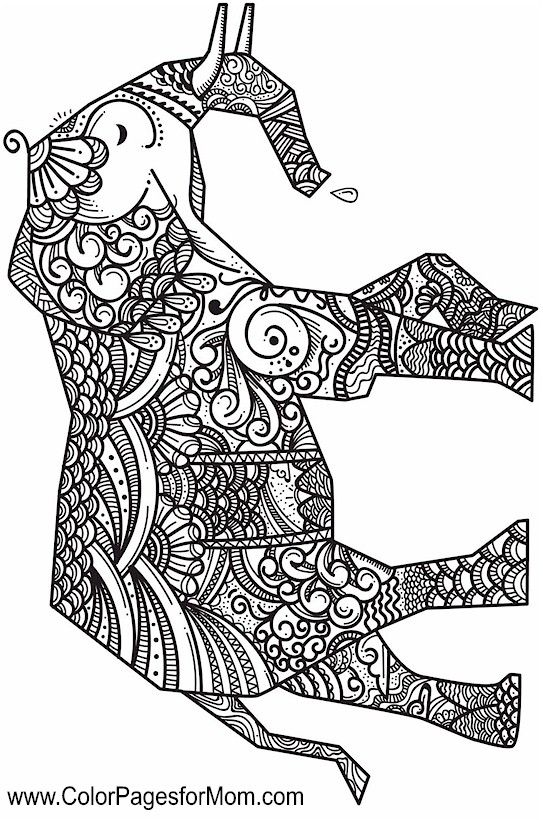 Elephant Zentangle Coloring Pages At Getdrawings Com Free For