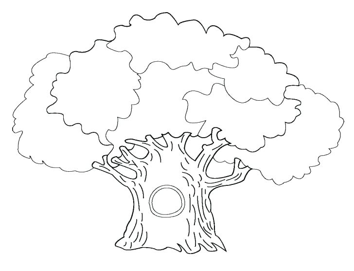 728x557 Coloring Page Tree Free Printable Tree Coloring Pages Related