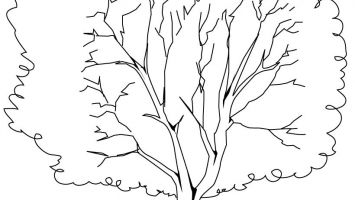 355x200 Coloring Pages Christmas Tree Blank Printable Coloring For Kids