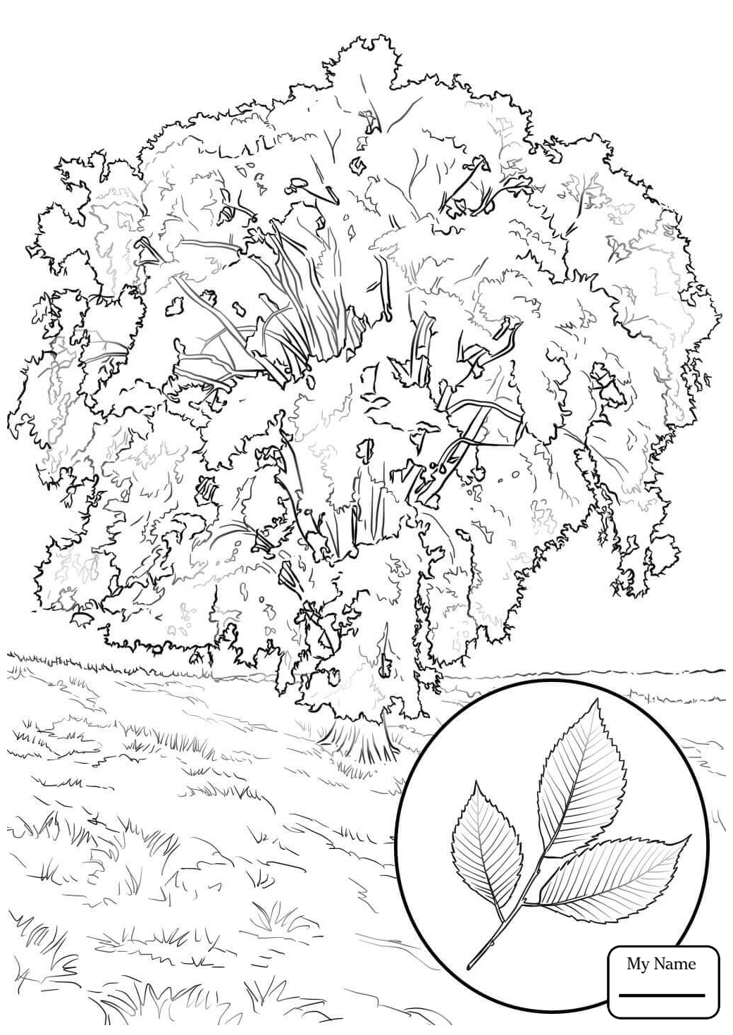 1040x1469 Coloring Pages Of An Elm Tree Free Coloring For Kids