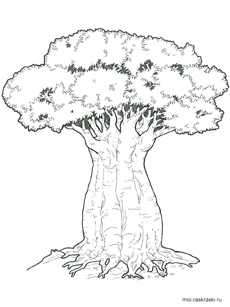 750x1000 Coloring Pages Trees Planting Oak Tree Coloring Page Coloring