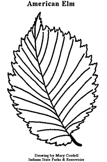364x550 Dnr Coloring Pages