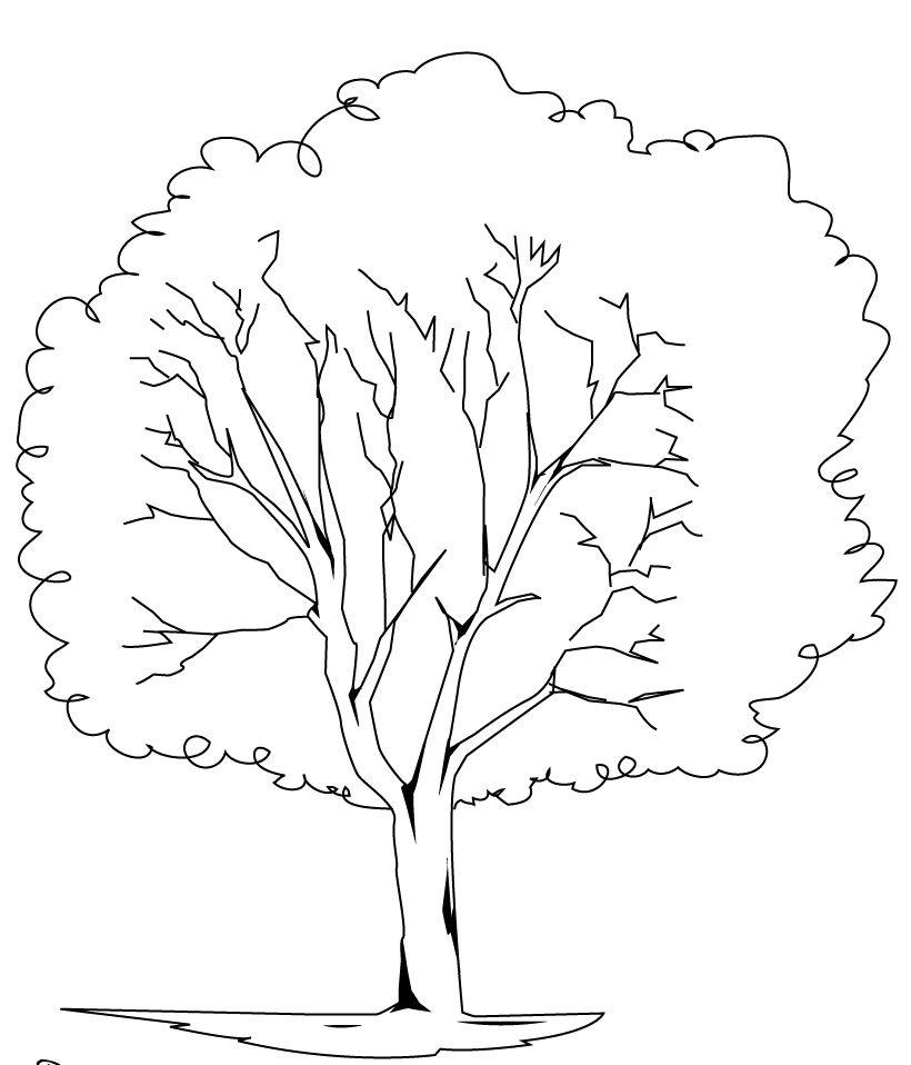 820x958 Elm Tree Coloring For Kids Peinture Arbres Et