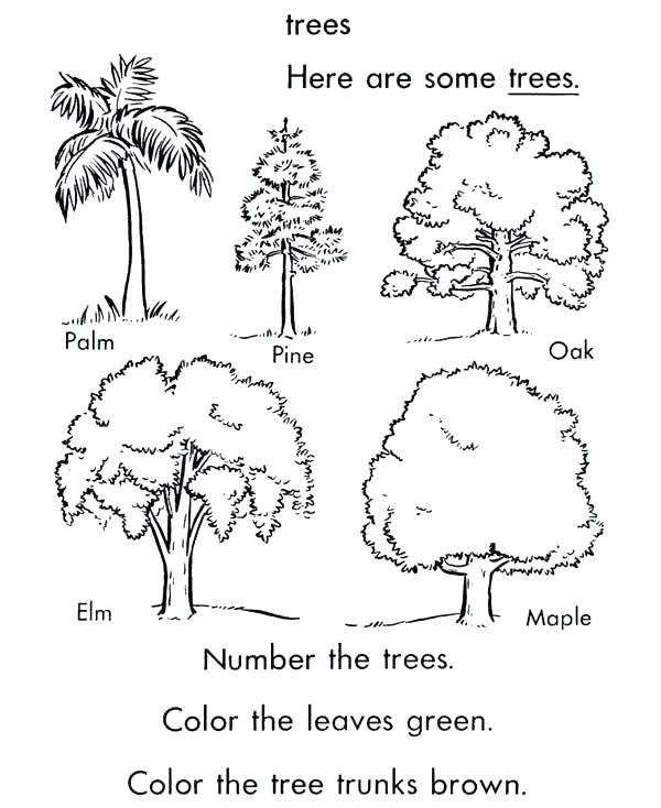 600x734 Free Printable Coloring Pages Of Palm Trees Kids Coloring
