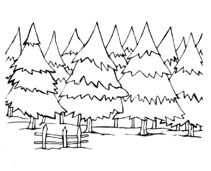 733x595 Tree Coloring Pages Pine Trees Coloring Pages Apple Tree Coloring
