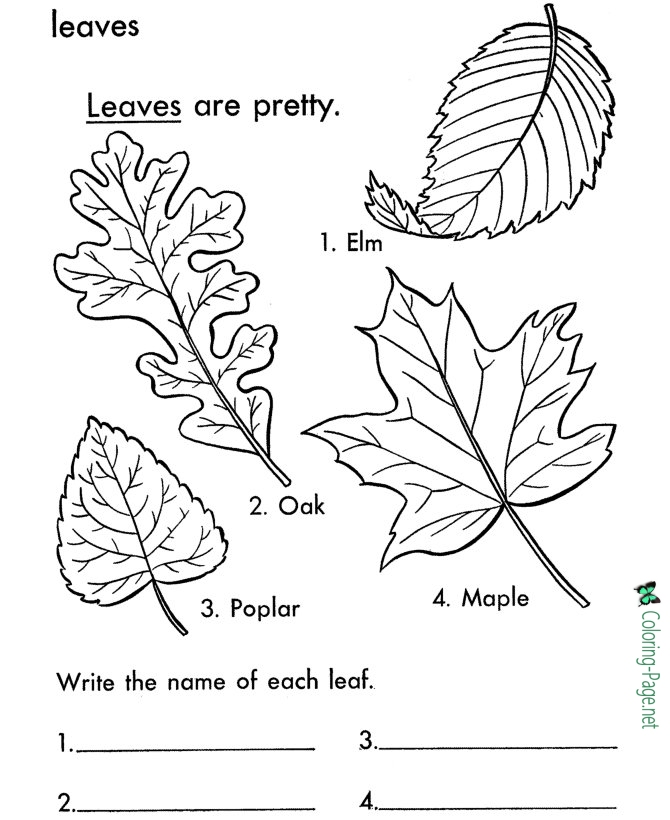 670x820 Tree Leaves Coloring Pages