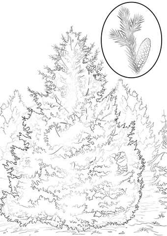 340x480 Tree Of Heaven Or Ailanthus Coloring Page