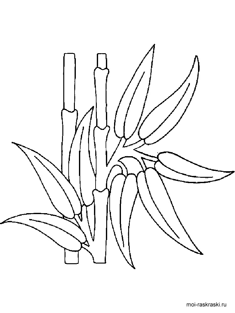 750x1000 Bamboo Coloring Pages For Kids Free Printable Bamboo Tree