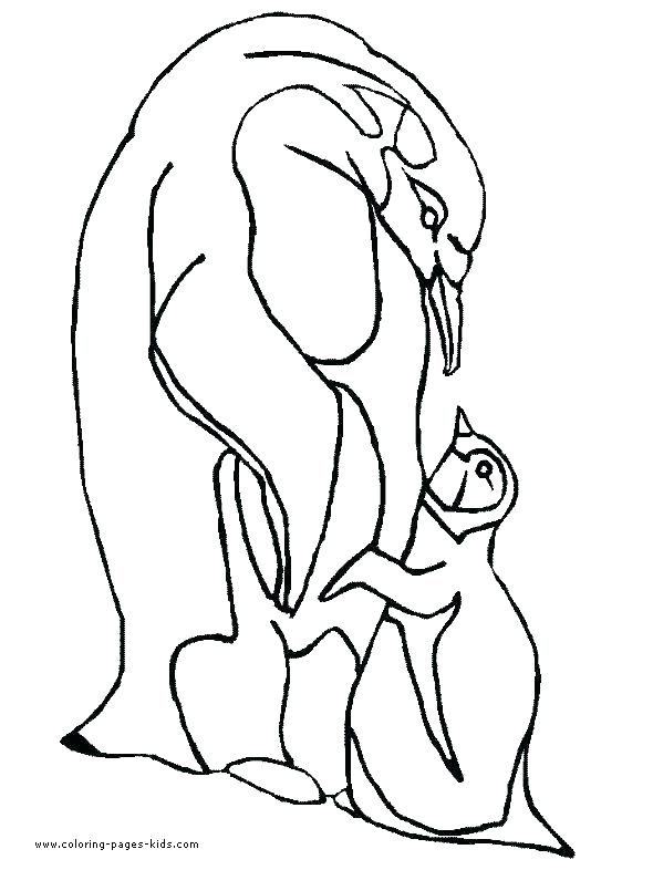 590x786 Emperor Penguin Coloring Page Picture Of Penguin To Color Emperor