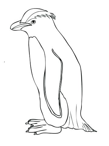 360x480 Penguin Side View Coloring Page Animal Best Penguin Side View