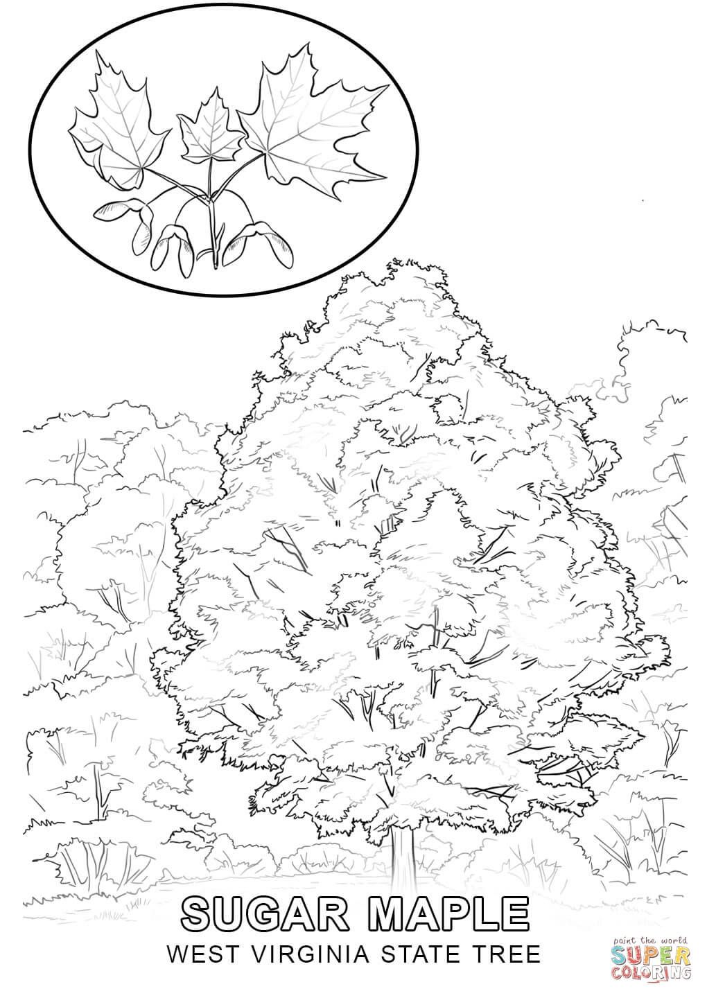 1020x1440 West Virginia State Tree Coloring Pages West Virginia Map