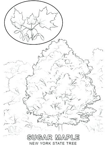 340x480 New York State Coloring Pages Jgheraghty Site
