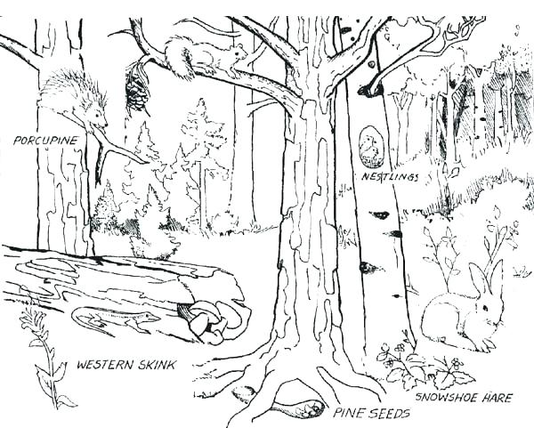 600x481 Forest Coloring Page Forest Coloring Sheet Forest Where Animals