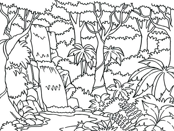 600x453 Forest Coloring Pages Forest Coloring Page Rain Forest Coloring