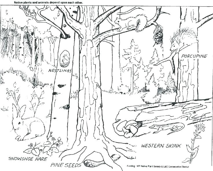 736x590 Coloring Pages Forest Forest Coloring Pages Deciduous Forest