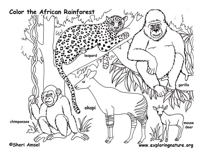 792x612 Rainforest Coloring Pages Best Of Rainforest Coloring Pages