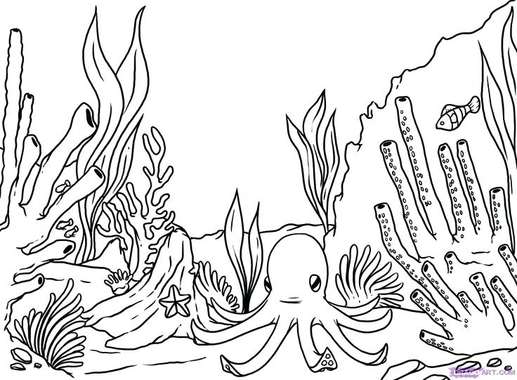 736x541 Terrific Endangered Species Coloring Pages Reef Plants Coloring