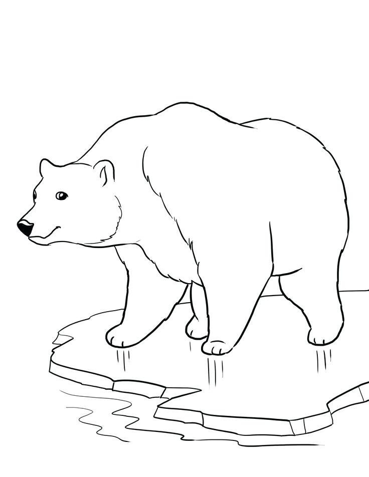 736x952 Endangered Species Coloring Pages Polar Bear Coloring Sheets