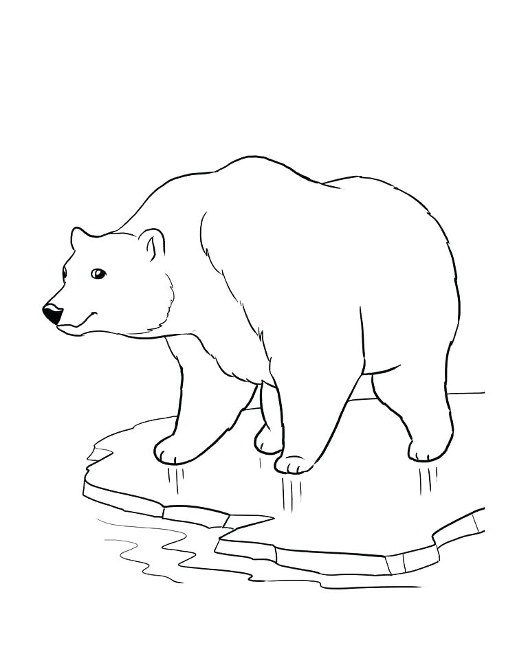 736x952 Endangered Species Coloring Pages Two Penguins Free Endangered