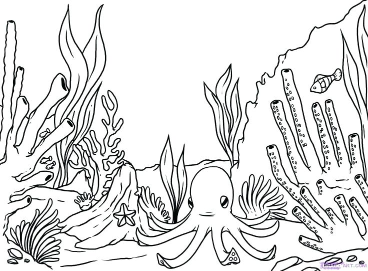 736x541 Terrific Endangered Species Coloring Pages Ocean Animals Coloring
