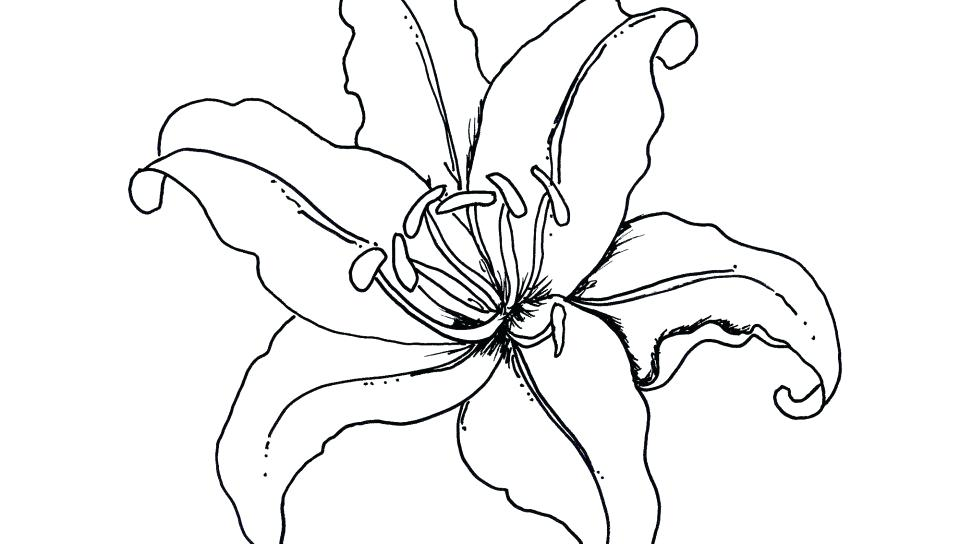 960x544 Tropical Coloring Pages Printable Coloring Pages Tropical Coloring