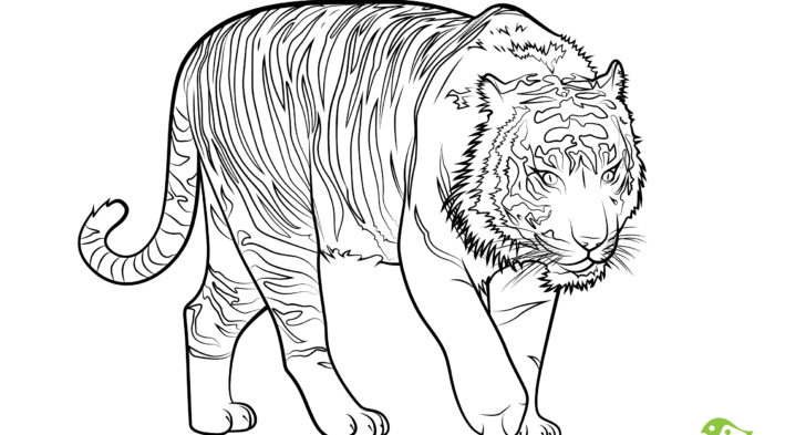 728x393 Endangered Animals Coloring Pages Endangered Animals Coloring
