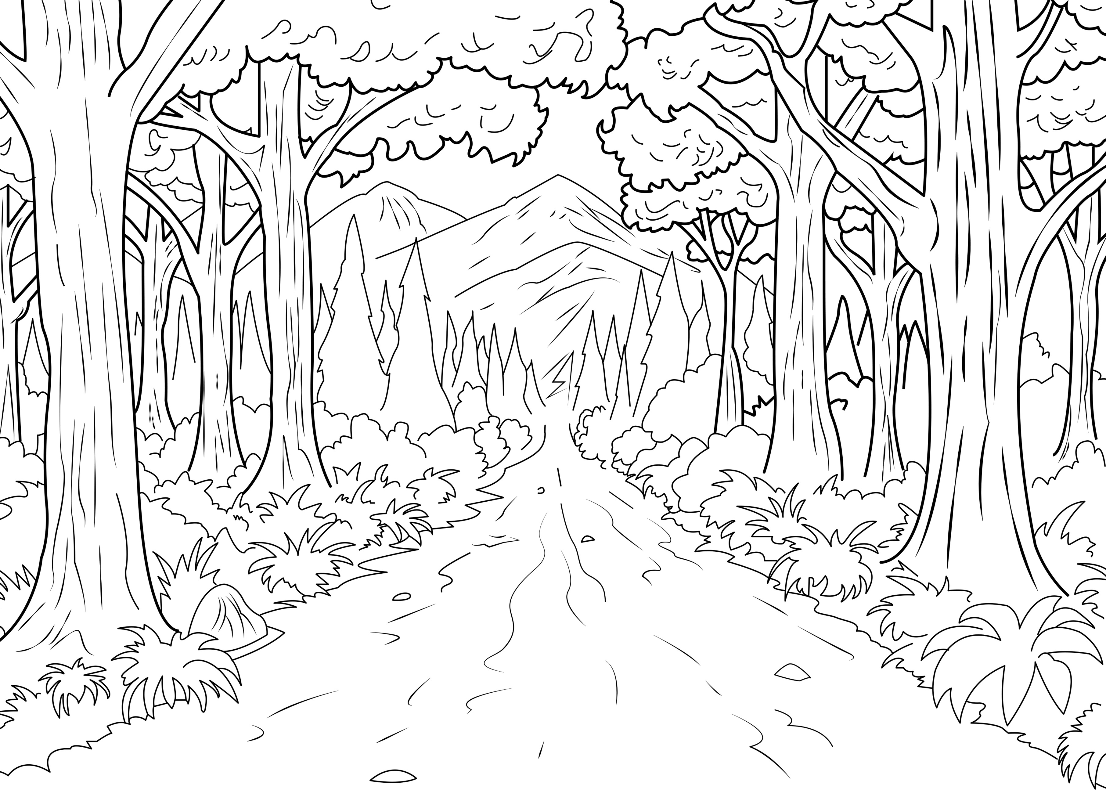 3625x2589 Rare Jungle Pictures To Color Energy Forest Celine Coloring Pages