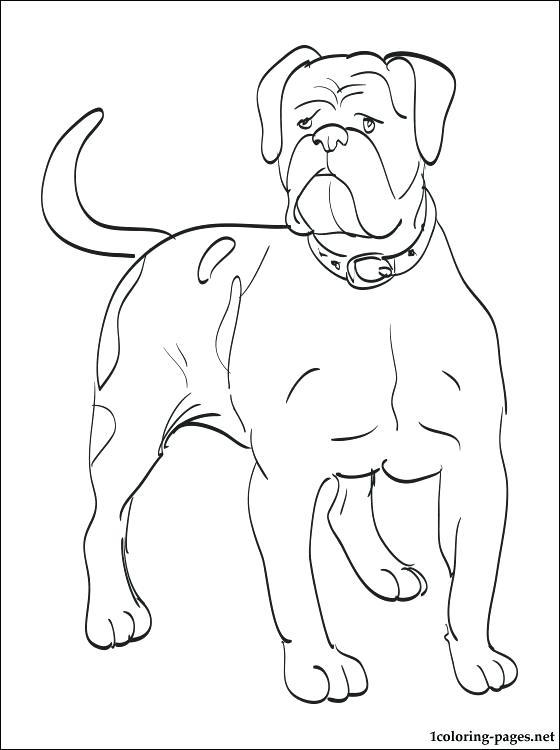 560x750 Bulldog Puppy Coloring Pages Kids Coloring Bulldog Coloring